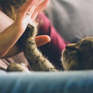 Communication animale