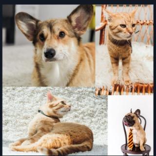 Soin lithothérapie animal 9jrs